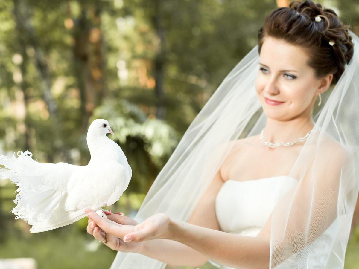 Weiße Tauben zur Hochzeit